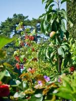 Garten 34