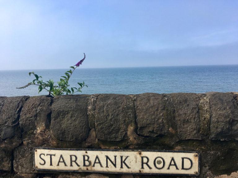 Schmetterlingsflieder @ Starbank Road